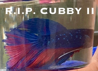 Cubby II's Gone to Glory
