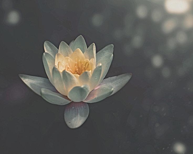 Lotus%252520Flower_edited_edited_edited.