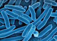 koli-bacteria-123081_1920 copie.jpg