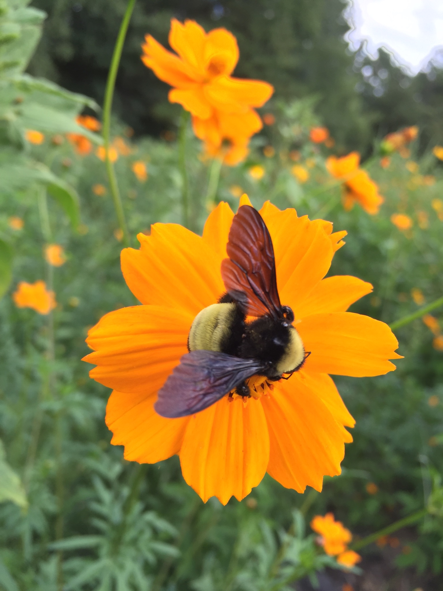 Bee in wildflower patch!
