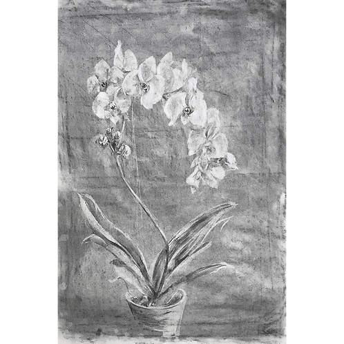 Orchids - original charcoal subtractive drawing.