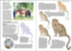 Double page spread Ruth Buchanan's book Hoof Hide and Heart, the art of drawing and painting animals