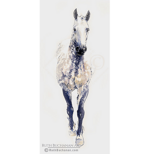 'Blackie' - Limited Edition Print of 150
