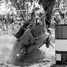 A rodeo barrel racing horse and contesta