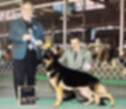Bear Winner Hossier Kennel club