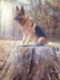 Champion dog K9 K-9 k9 k-9