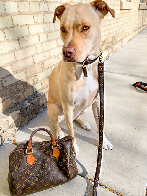 Custom Upcycled LV Dog Collar/Leash Combo