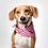 Thumbnail: Dalmatian Fuchsia Dog Bandana - S