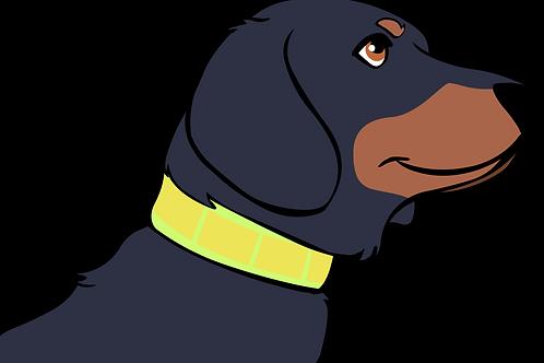 Reflexhalsband Hund
