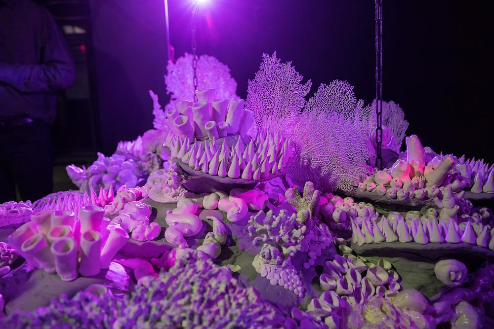 Image of Katrina Fuller's, The Body Reef, installed at Envoy Enterprises.