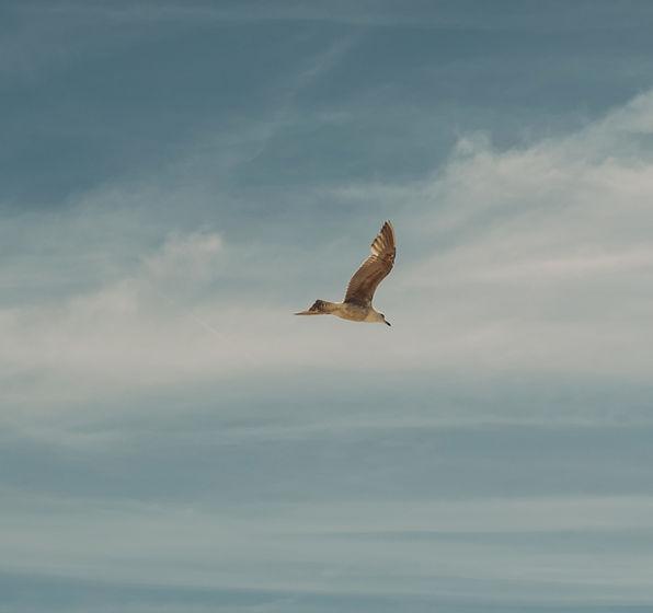 A seagull fly's across a blue sky