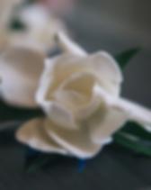 Screen Shot 2019-02-02 at 2.48.02 PM.png