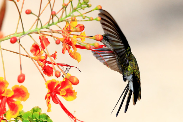 The Heart is a Hummingbird