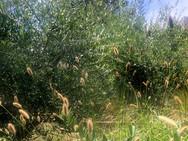 Point Loma Garden