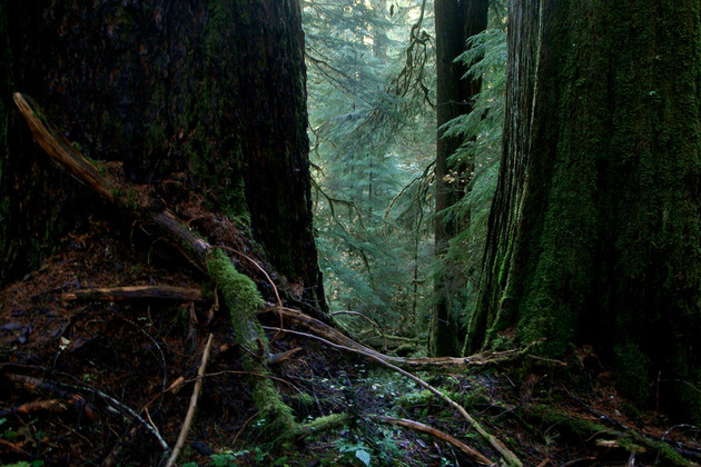 Ecological-forestry-old-growth-Ryan.jpg