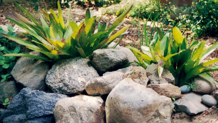 1_Outside-In-bromeliads-Ryan.jpg