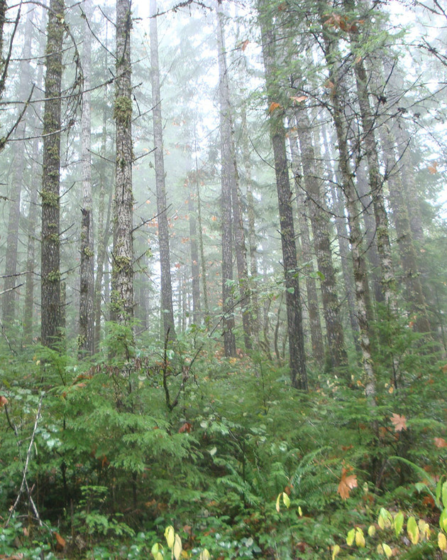 Ecological-forestry2-Ryan.jpg