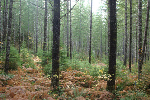 Cover_Ecological-forestry1-Ryan.jpg