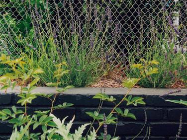 Outside/In Garden