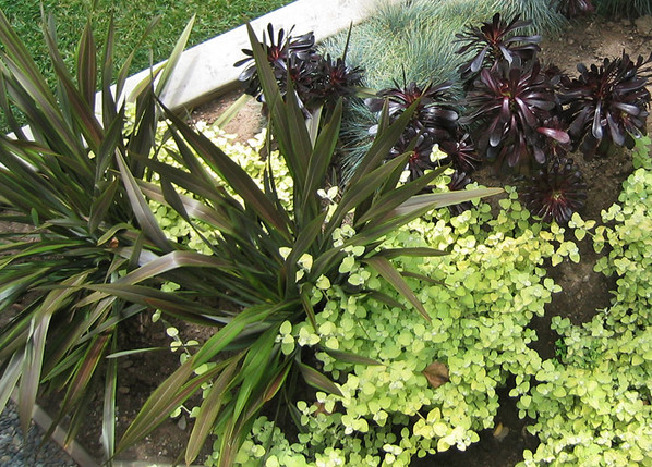 SMonica-plant-combo-Ryan.jpg