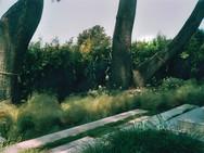 Solana Beach Garden