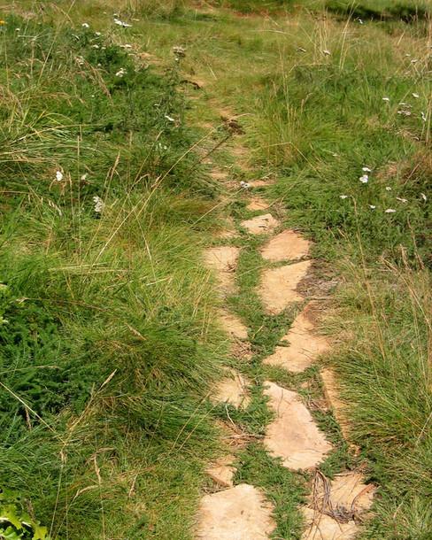 Hilltop-meadow-path-Ryan.jpg