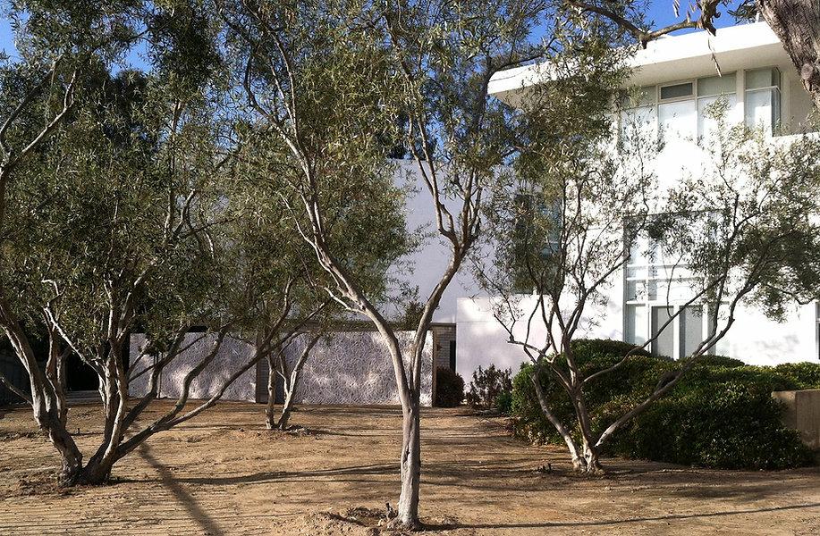 LJ-Farms-olives-Ryan.jpg