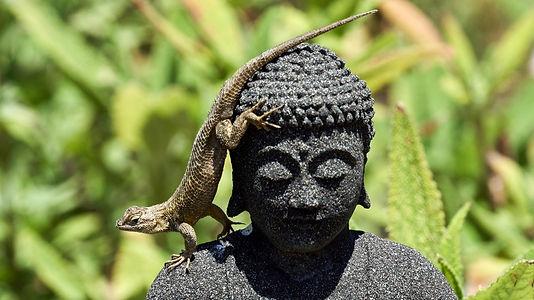 Cunningham-lizard-meets-Buddha_edited.jp