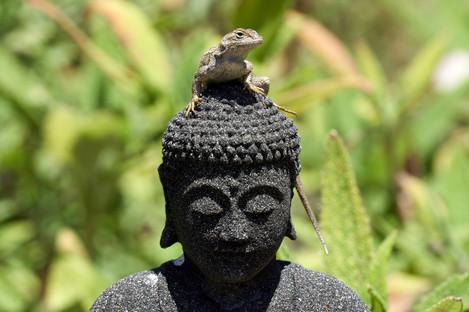 Cunningham-Buddha-meets-lizard.jpg