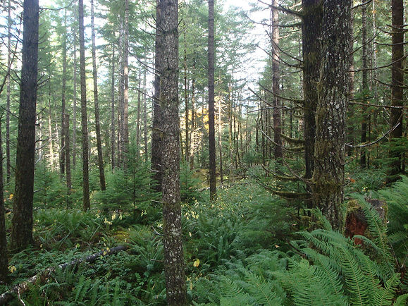 Ecological-forestry3-Ryan.jpg
