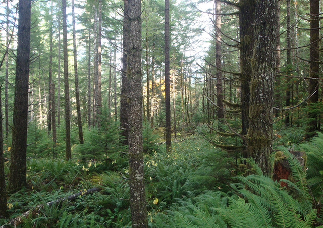 Ecological Forestry and the Honorable Harvest