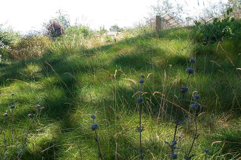 Hilltop-meadow2-Ryan.jpg