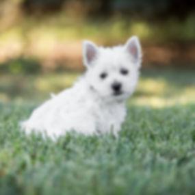 Pupp.jpg