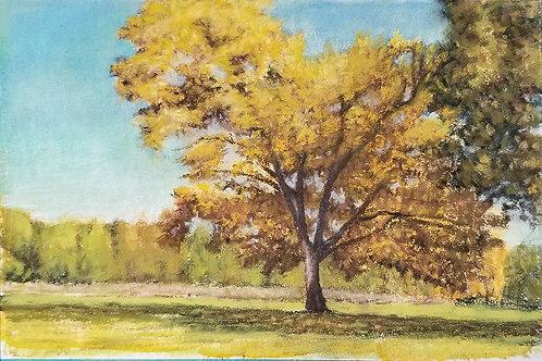 The Golden Oak