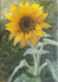 sunflowers_02_cropped.jpg