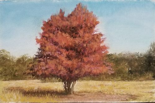 The rust colored tree