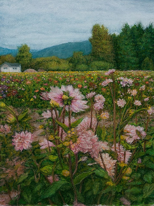 Fall City - field of flowers