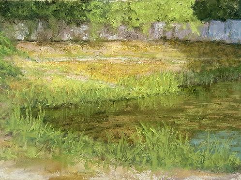 Afternoon light on pond