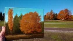 Marymoor Park (fall)