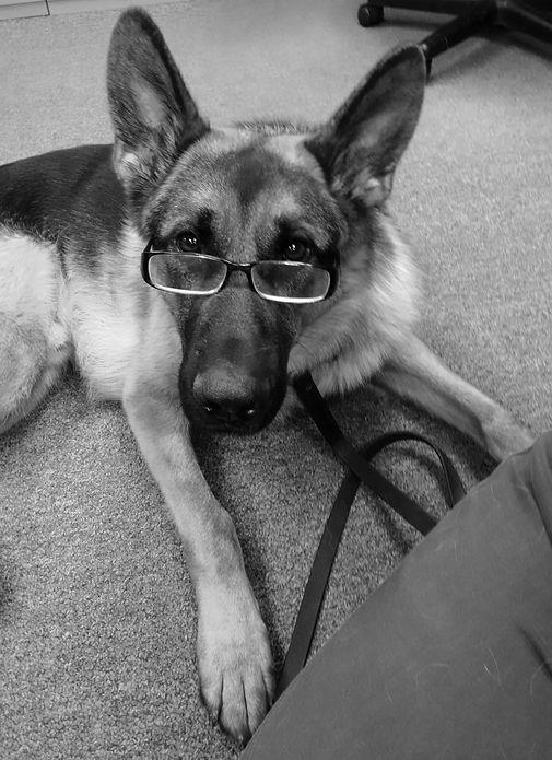 eyeglasses, sunglasses