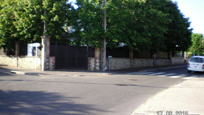 Les arbres de Beauchamp replantés par la promotion immobilière sont déjà morts
