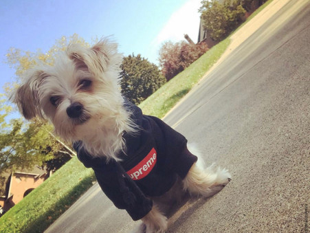 Dressing Your Dog for Fashion and Function