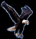 flyingeagle.png