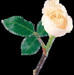 whiterose1.png