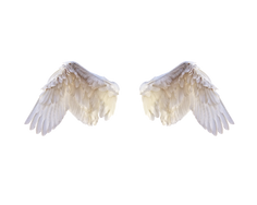 white_wings1.png