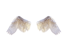 white-wings.png