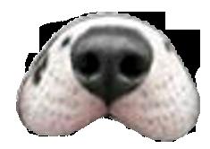 dog_nose.png