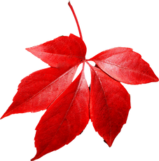 autumn_leaves_PNG3592.png