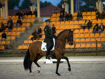 Como evitar lesões em cavalos de alta competição?
