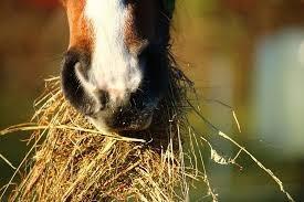 Que cuidados se deve ter com a alimentação de um cavalo de alta competição?